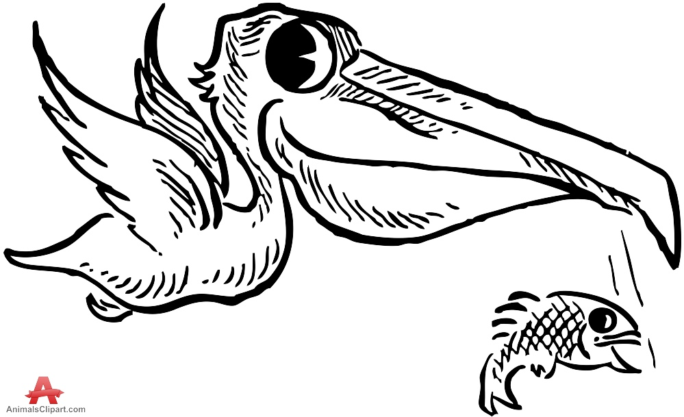 Pelican clipart fish. Bird with outline clip