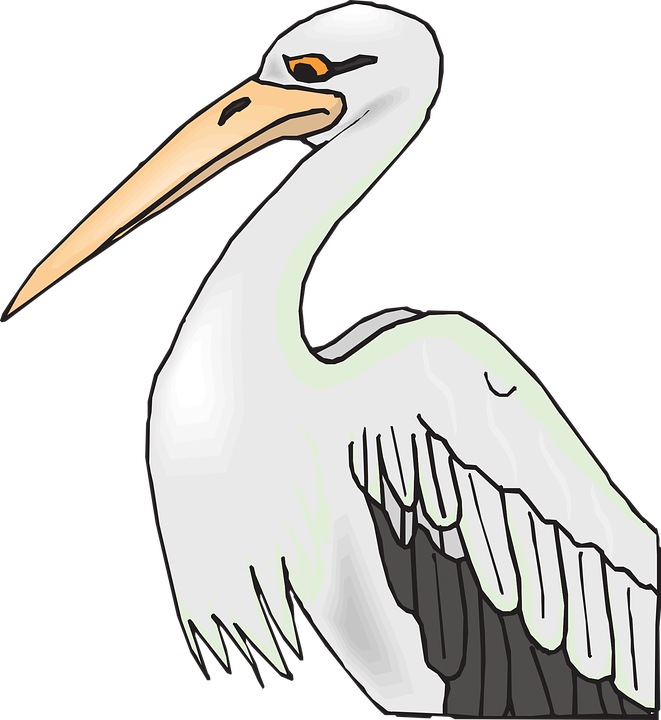 Png transparent images image. Pelican clipart icon