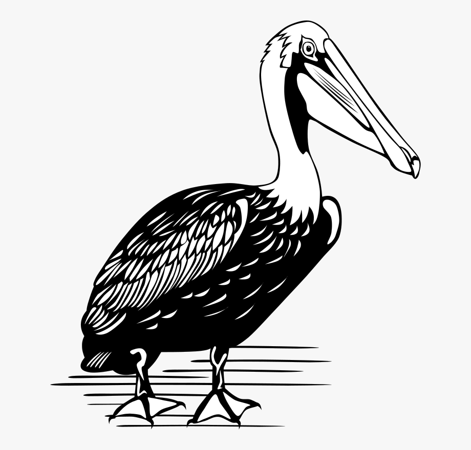 Pelican clipart icon. Brown black and white