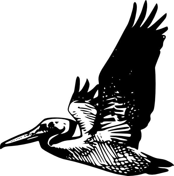 Pelican clipart vector. Flying clip art free