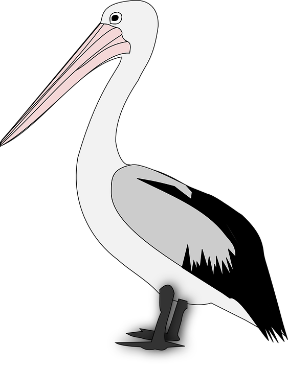 Png transparent images image. Pelican clipart vector