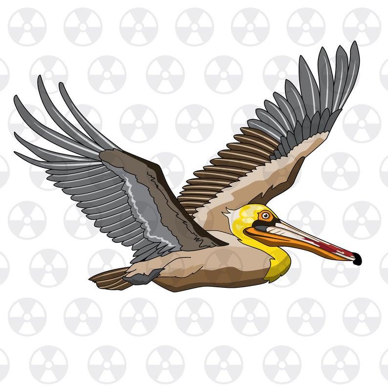Louisiana wildlife brown in. Pelican clipart vector