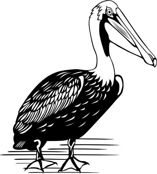 Clip art free in. Pelican clipart vector