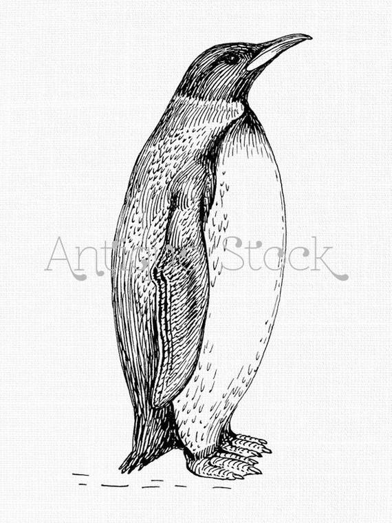 Penguin clipart line. Digital download drawing illustration