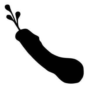 Station . Penis clipart