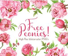 Free watercolor now available. Peonies clipart