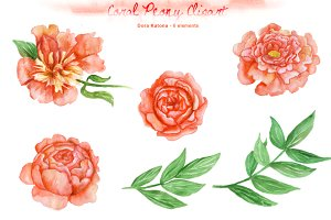 Peonies clipart. Watercolor coral peony illustrations
