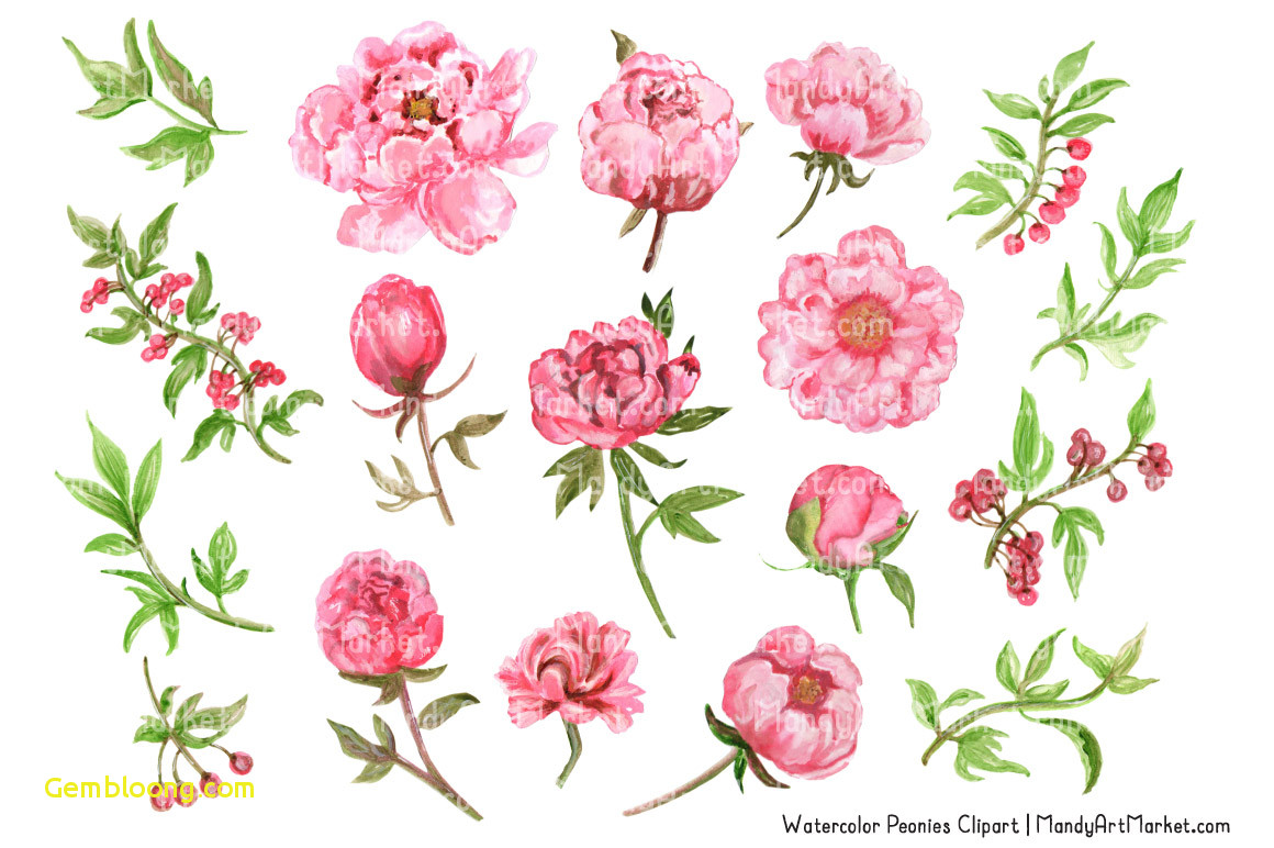 Pink peony watercolor luxury. Peonies clipart
