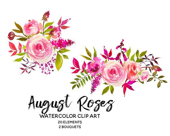 Pink peach roses watercolor. Peonies clipart
