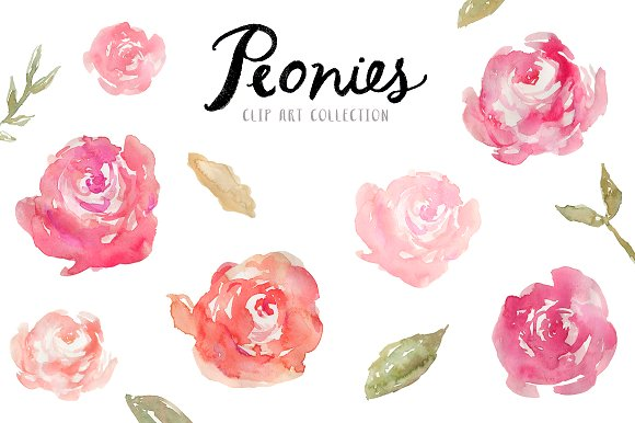 Peonies clipart. Watercolor clip art illustrations