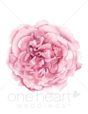 Peony wedding flower. Peonies clipart