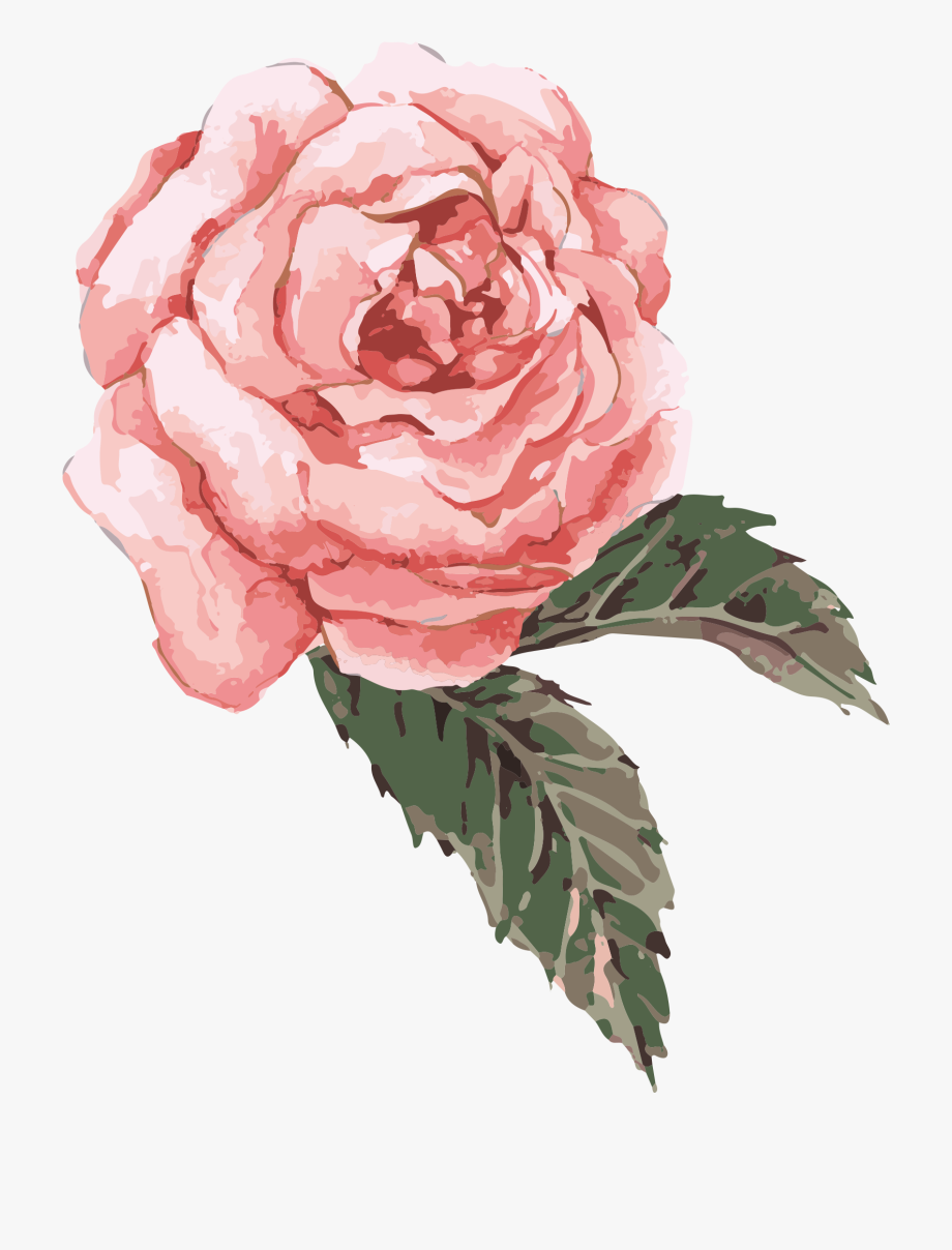 Peony clipart clear background rose. Clip art transparent watercolor