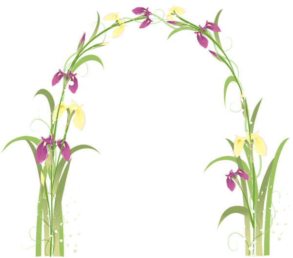 Transparent png picture elementy. Peony clipart floral arch