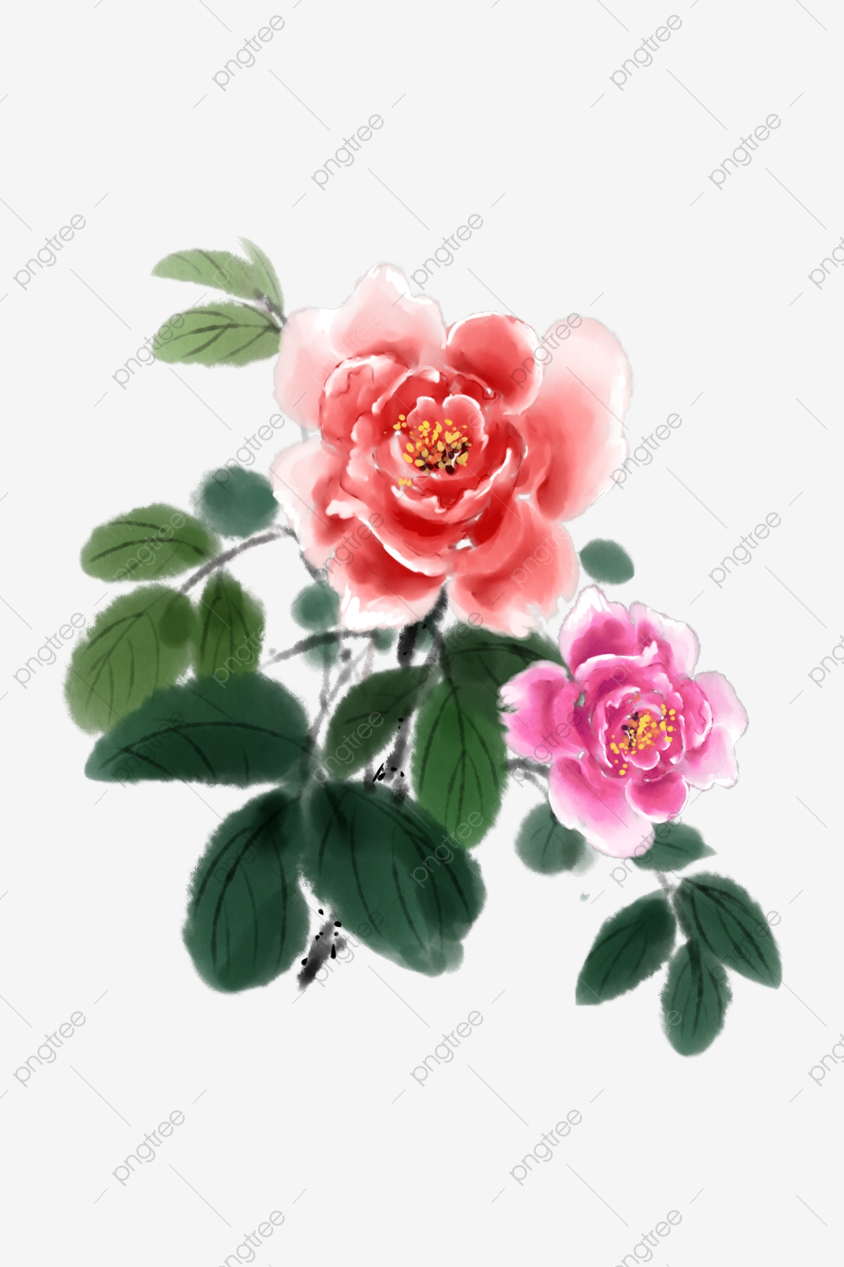 Peony flowers pink natural. Peonies clipart graduation flower