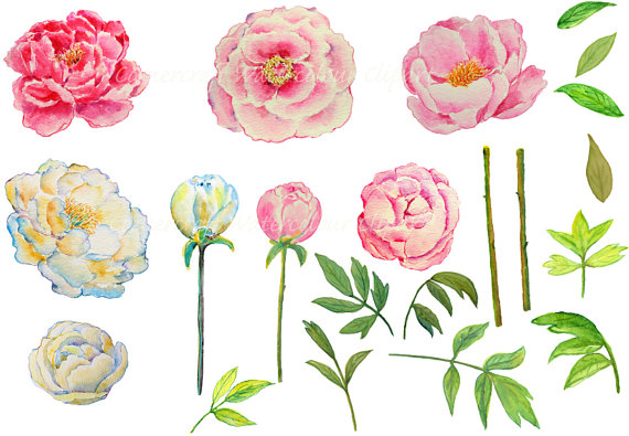 Wedding watercolor pink and. Peony clipart printable
