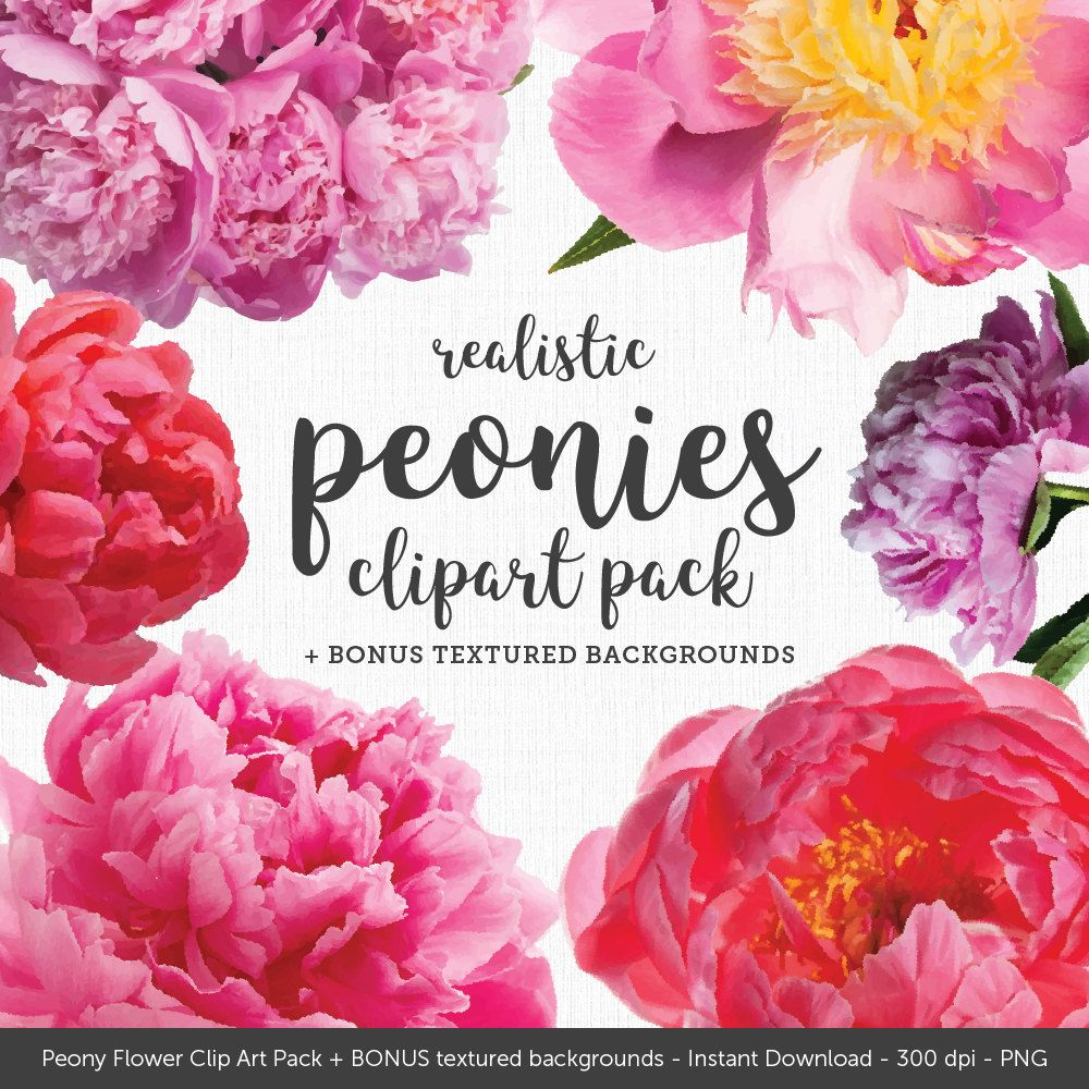 Peony clipart realistic. Peonies clip art plus