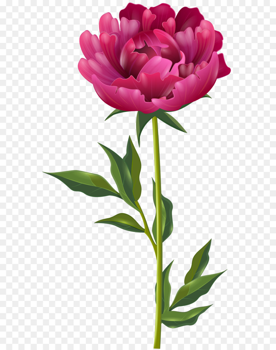 Peony clipart. Clip art pink png