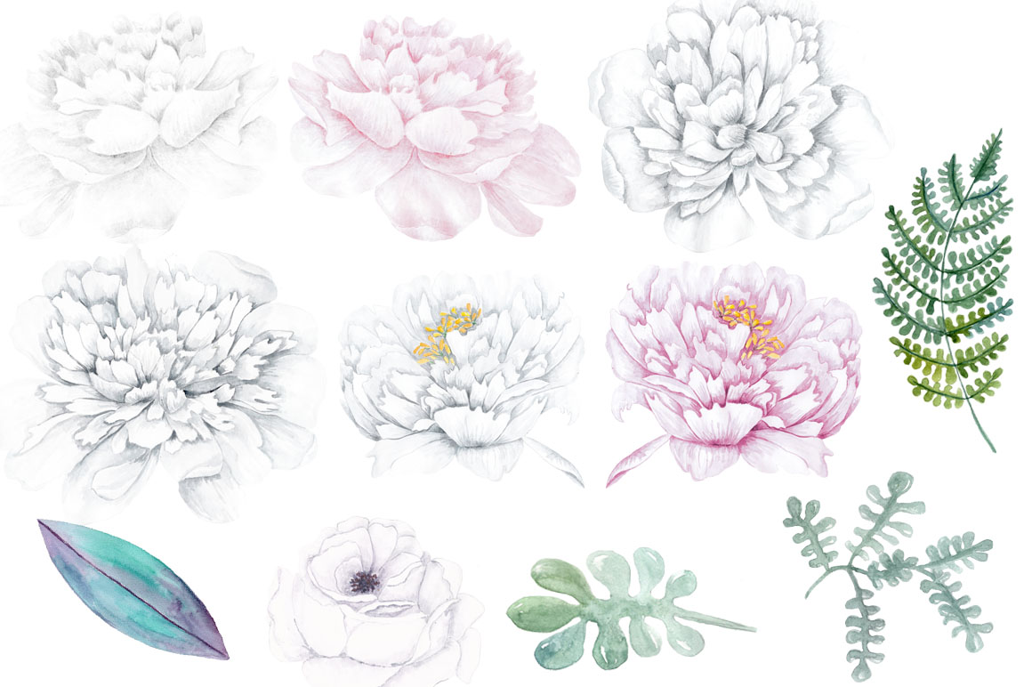 Watercolor white flowers design. Peony clipart