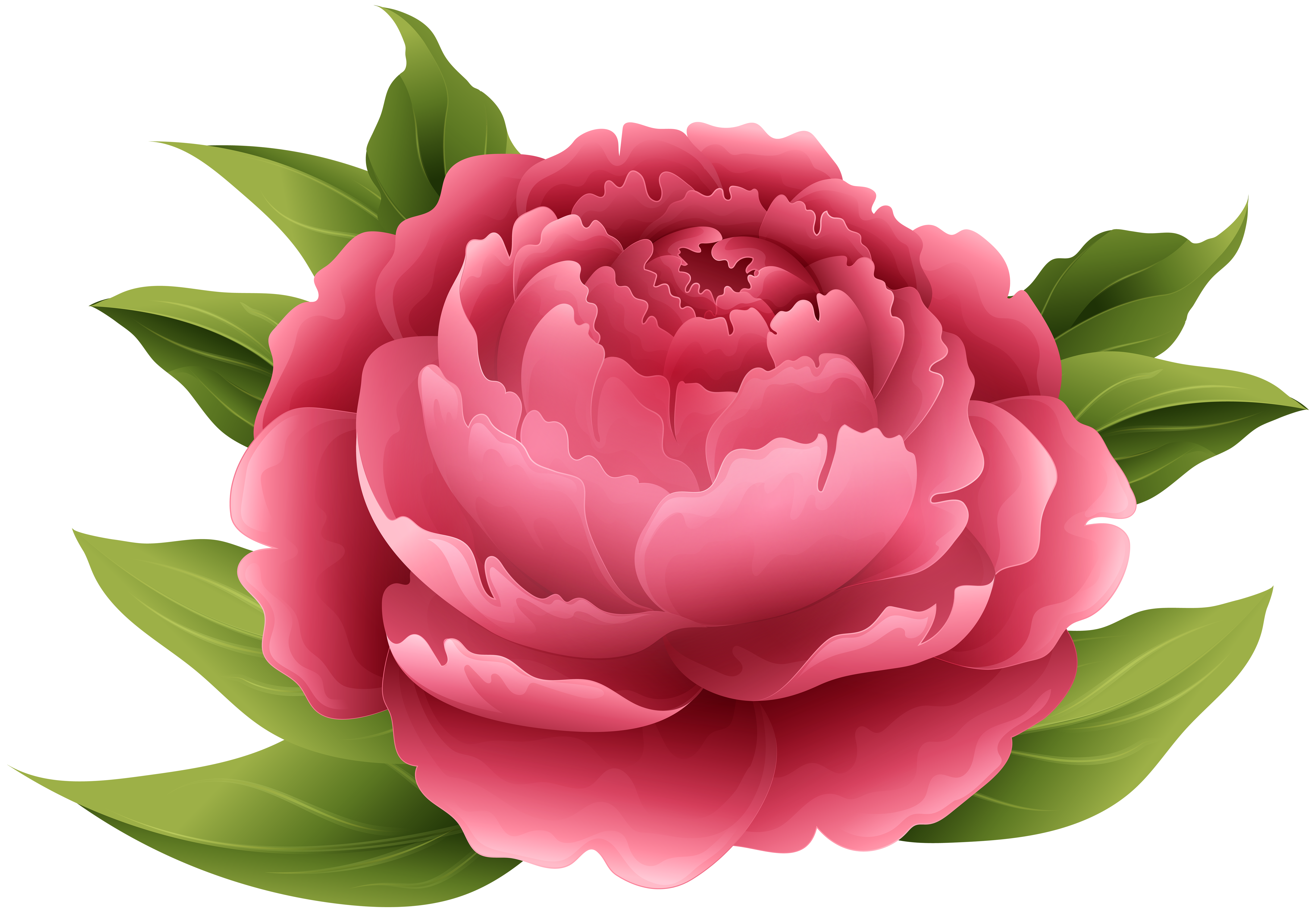 Peony clipart. Red png clip art