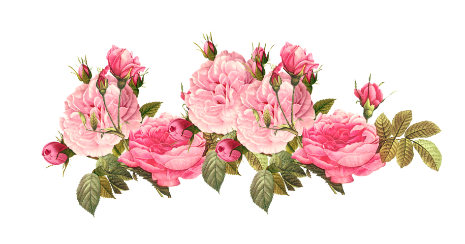 Pink flowers clip art. Peony clipart clear background rose