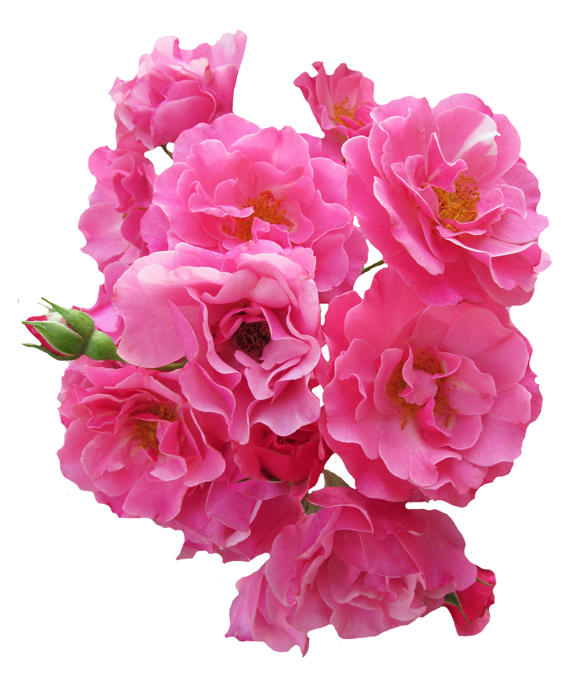 Rose clipart bunch. Pink flower png image