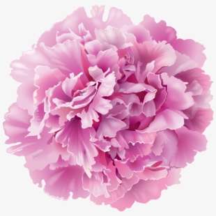 Peony clipart realistic. Art images flower clip