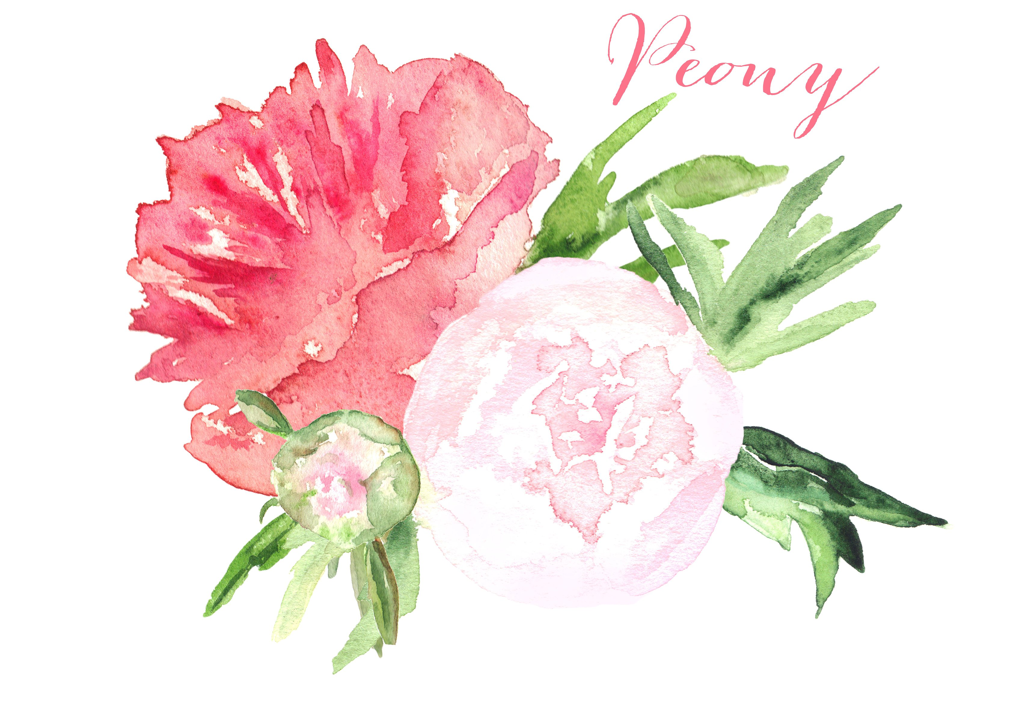 Peony clipart. Watercolor clip art graphics