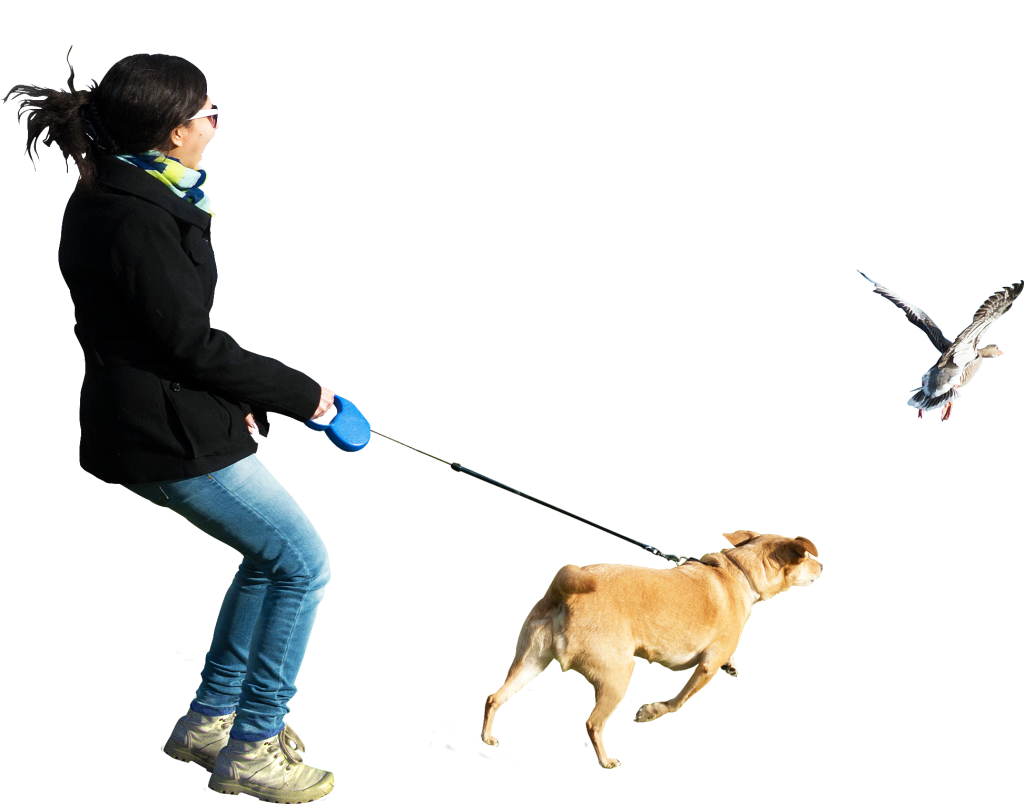 Running at birds png. Pet clipart person dog