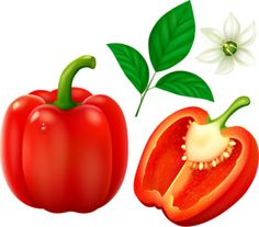 best clip art. Peppers clipart single vegetable