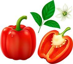 best clip art. Peppers clipart single vegetable
