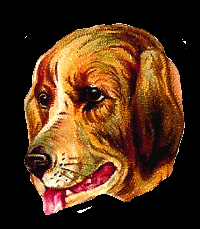 Pet clipart 3 animal. Antique images vintage dog
