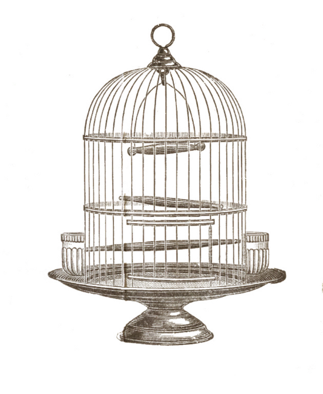 Birdcage domestic clip art. Pet clipart canary