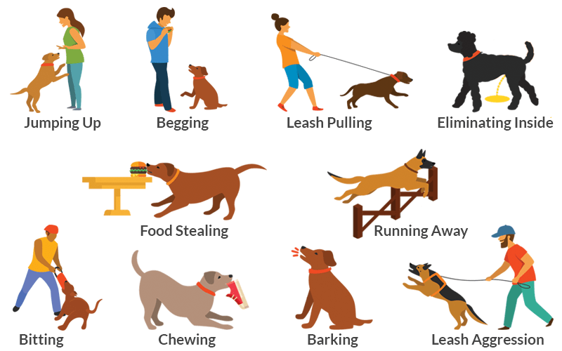 Pet clipart common animal.  dog behavior problems