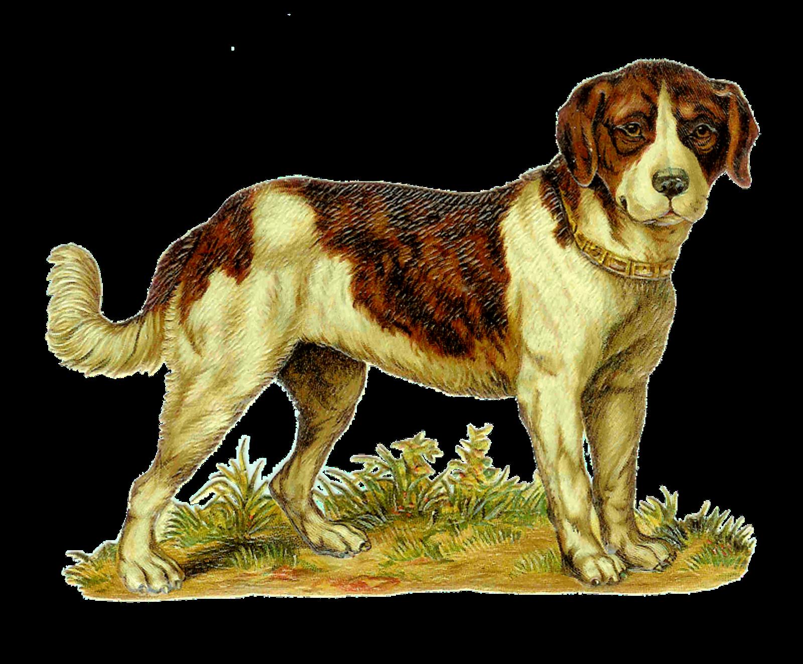 Antique images vintage dog. Pet clipart first