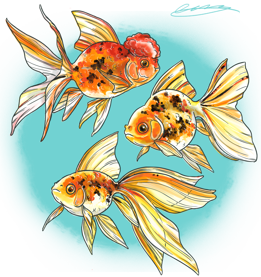Pets wakley animation previous. Pet clipart fish feeder