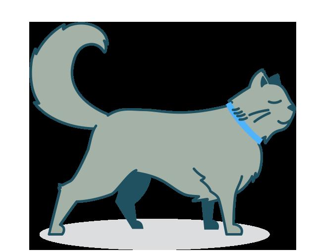 Food finder petspot cat. Pets clipart loyal dog