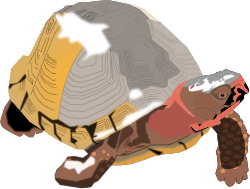 Box turtle medium image. Pet clipart pet tortoise