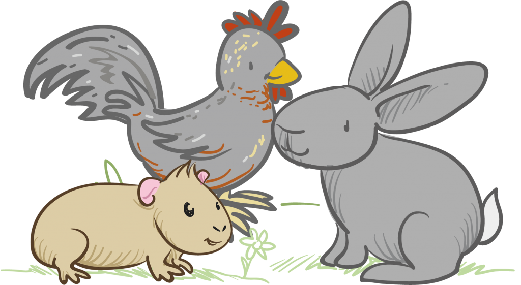 Pet clipart small pet. Chicken animal boarding pets
