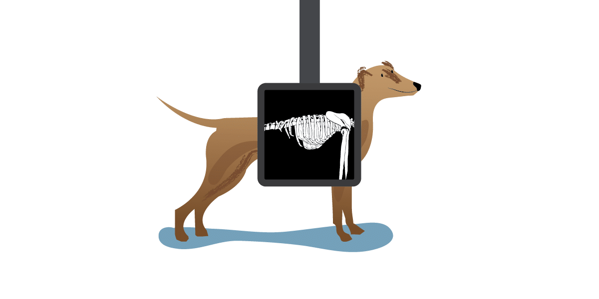 Rolda uk responsibly save. Pets clipart xray