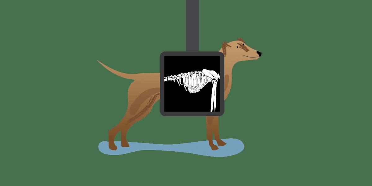 Xray clipart dog xray. Rolda uk responsibly save
