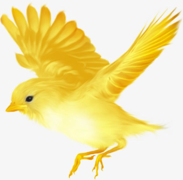 Pet clipart yellow bird. Millions of png images