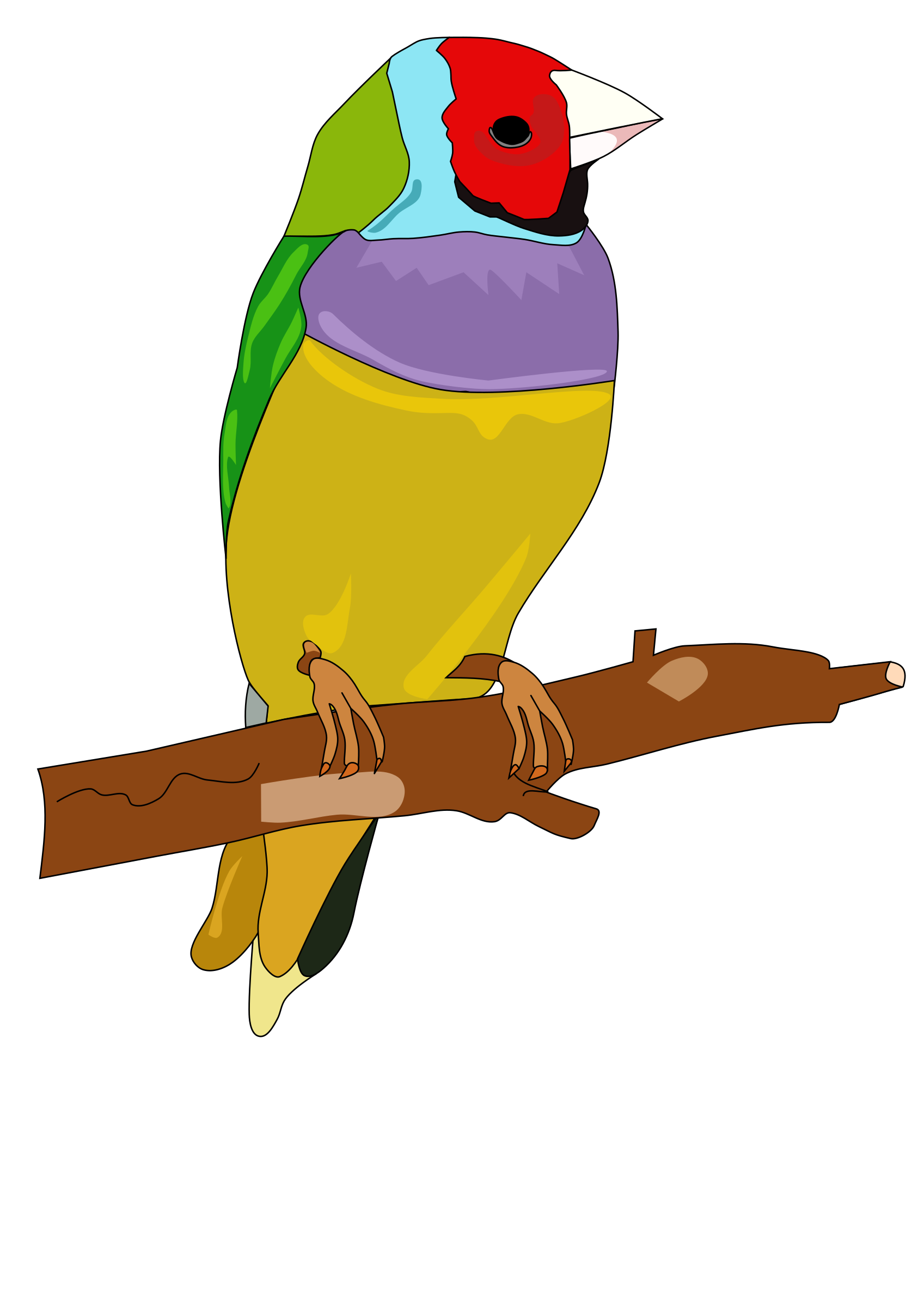 . Pet clipart yellow bird
