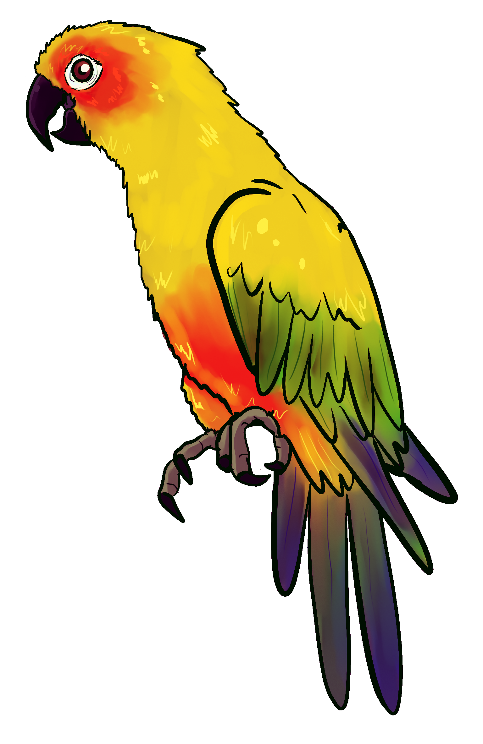 Pet clipart yellow parrot. Drawing of an free