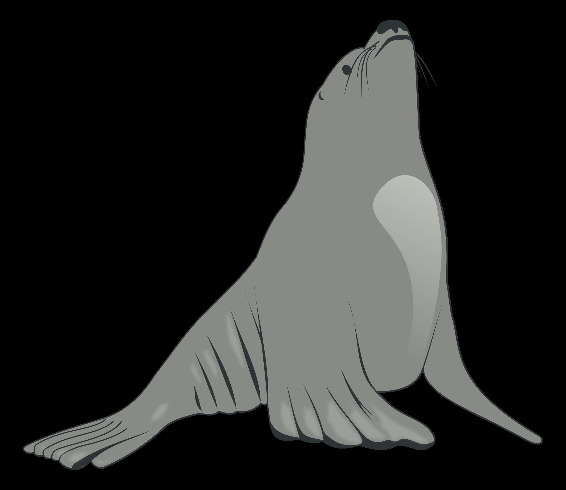 Walrus clipart black and white. Sea lion