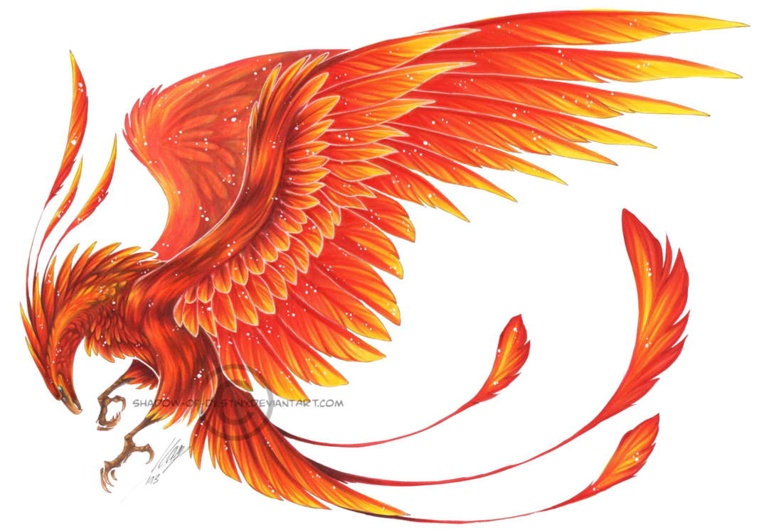 Phoenix clipart fawkes. Deviantart more collections like