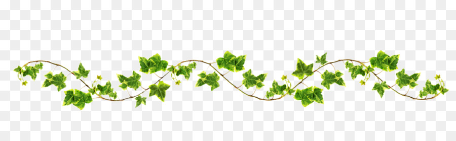 Family tree background vine. Vines clipart grass