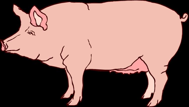 clip art realistic. Pig clipart fetal pig