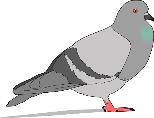 Clip art free vector. Pigeon clipart