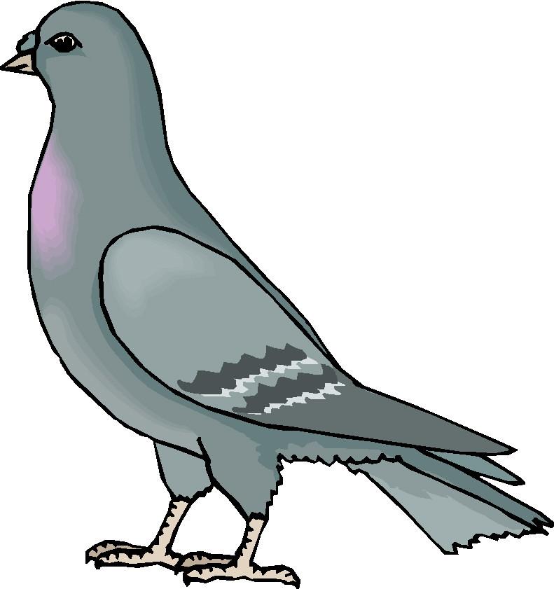 Pigeon clipart. Clip art free panda