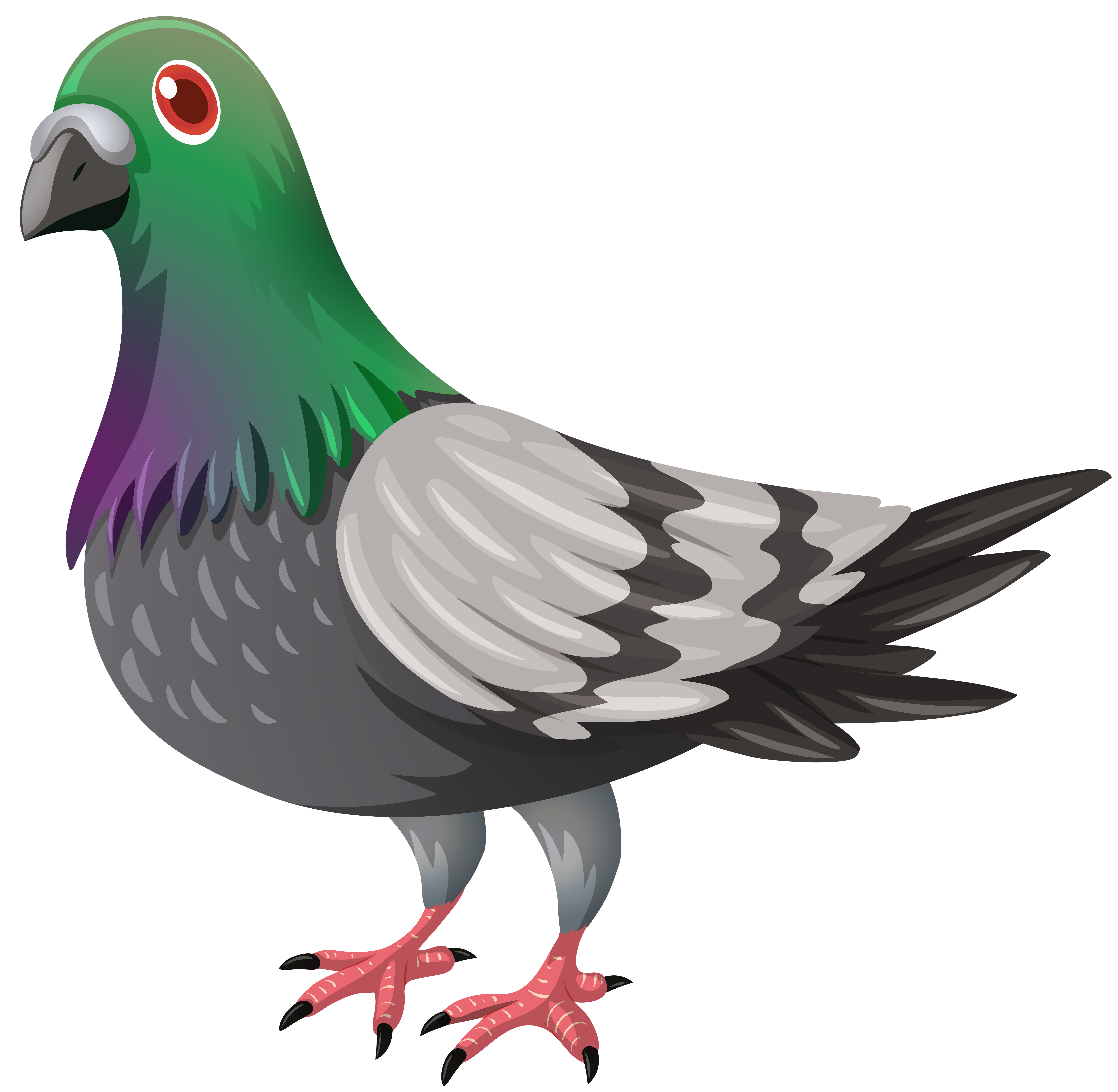 Transparent png image gallery. Pigeon clipart